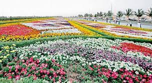 أكبر سجادة زهور في العالم..في مهرجان الزهور والحدائق الثامن-بينبع.